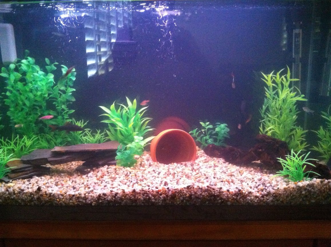 29 gallons freshwater fish tank (mostly fish and non-living decorations) - 29 gallon see profile for fish.