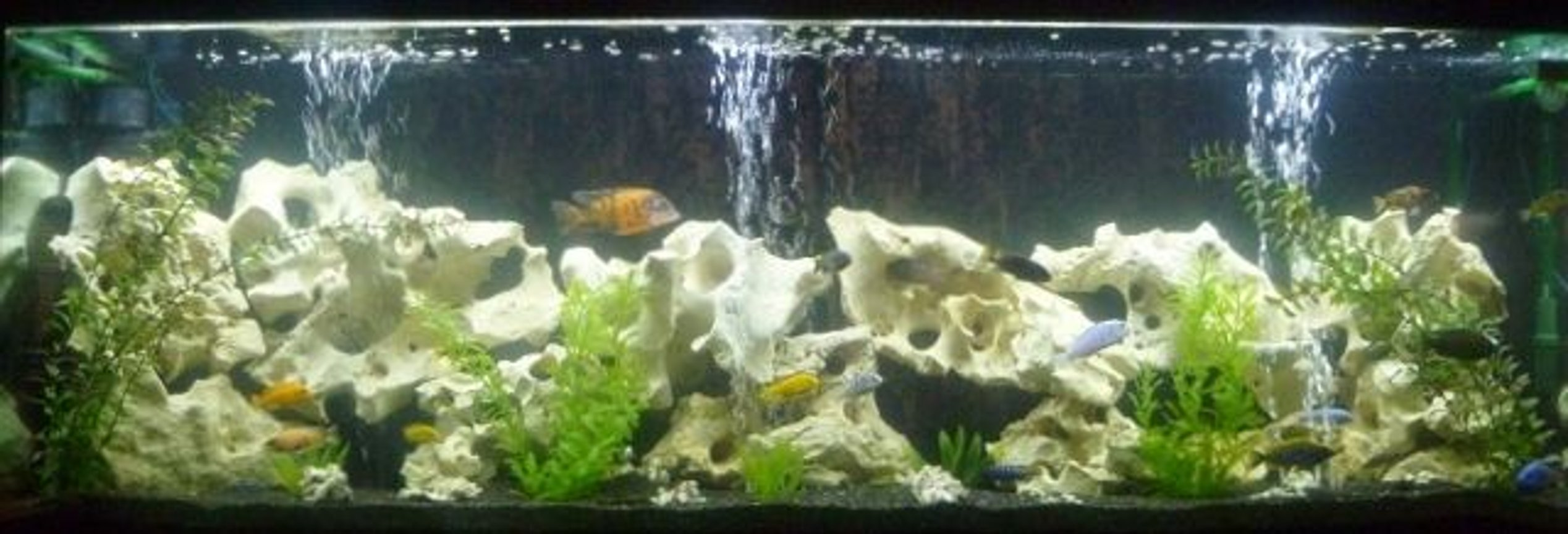 135 gallons freshwater fish tank (mostly fish and non-living decorations) - 135 gallon African Cichlid Tank