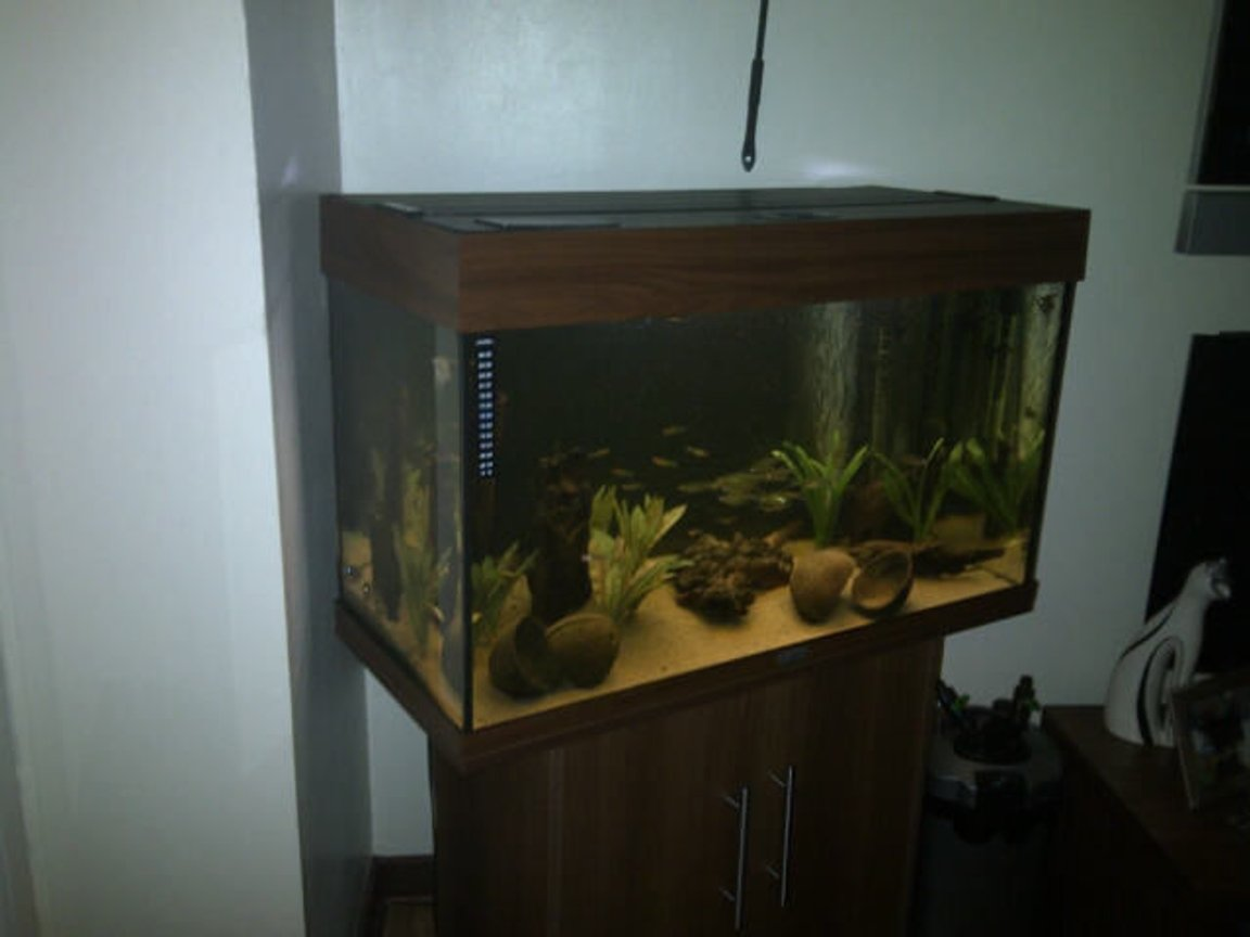 30 gallons freshwater fish tank (mostly fish and non-living decorations)