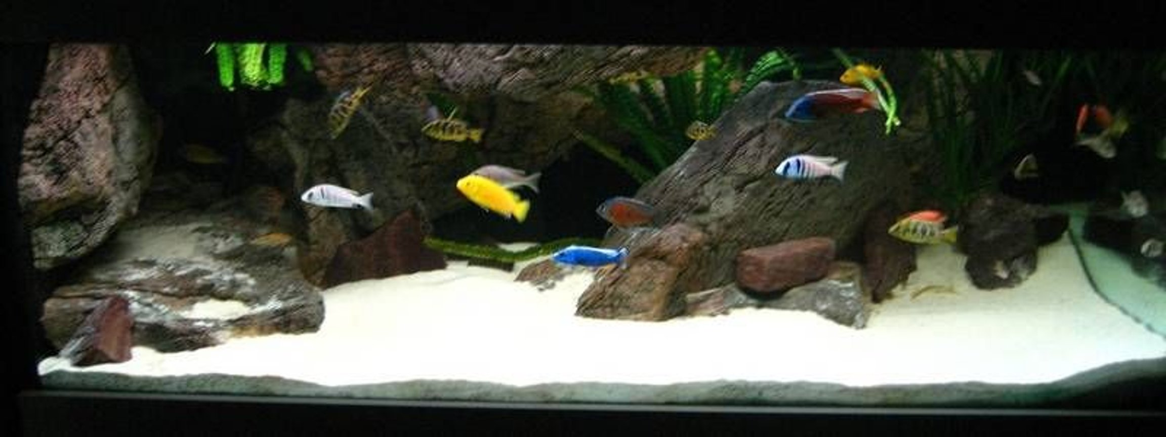 280 gallons freshwater fish tank (mostly fish and non-living decorations)
