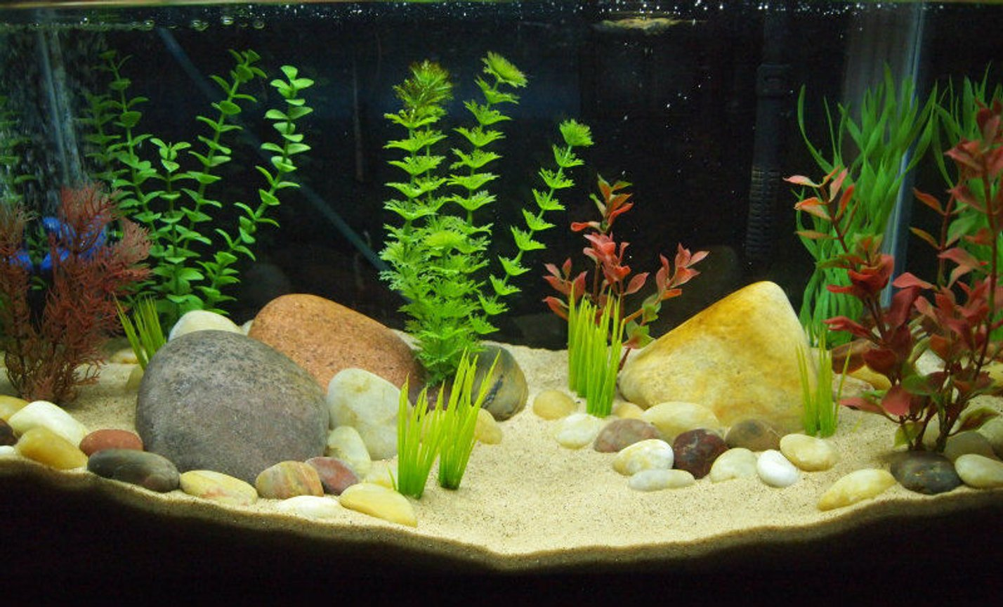 10 gallons freshwater fish tank (mostly fish and non-living decorations) - 10 gallon newt tank. Used to be a betta tank.