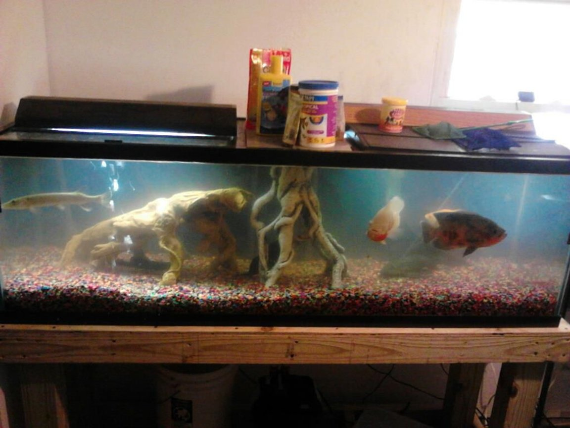 100 gallons freshwater fish tank (mostly fish and non-living decorations) - 100 gal tank