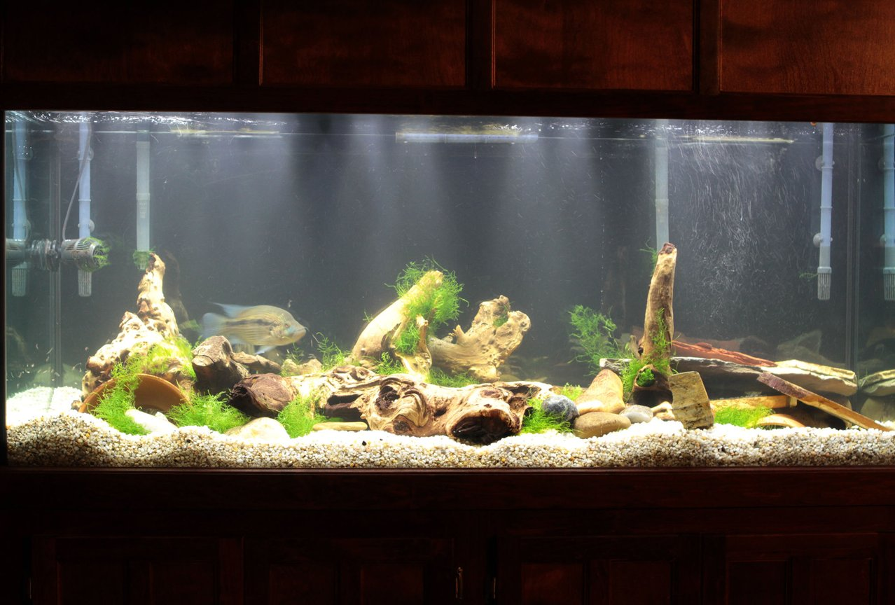 220 gallons freshwater fish tank (mostly fish and non-living decorations) - Front1