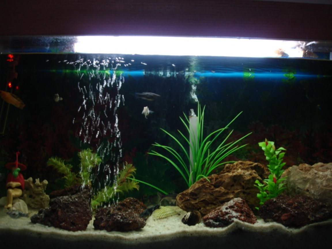 40 gallons freshwater fish tank (mostly fish and non-living decorations) - Good things come in small packages