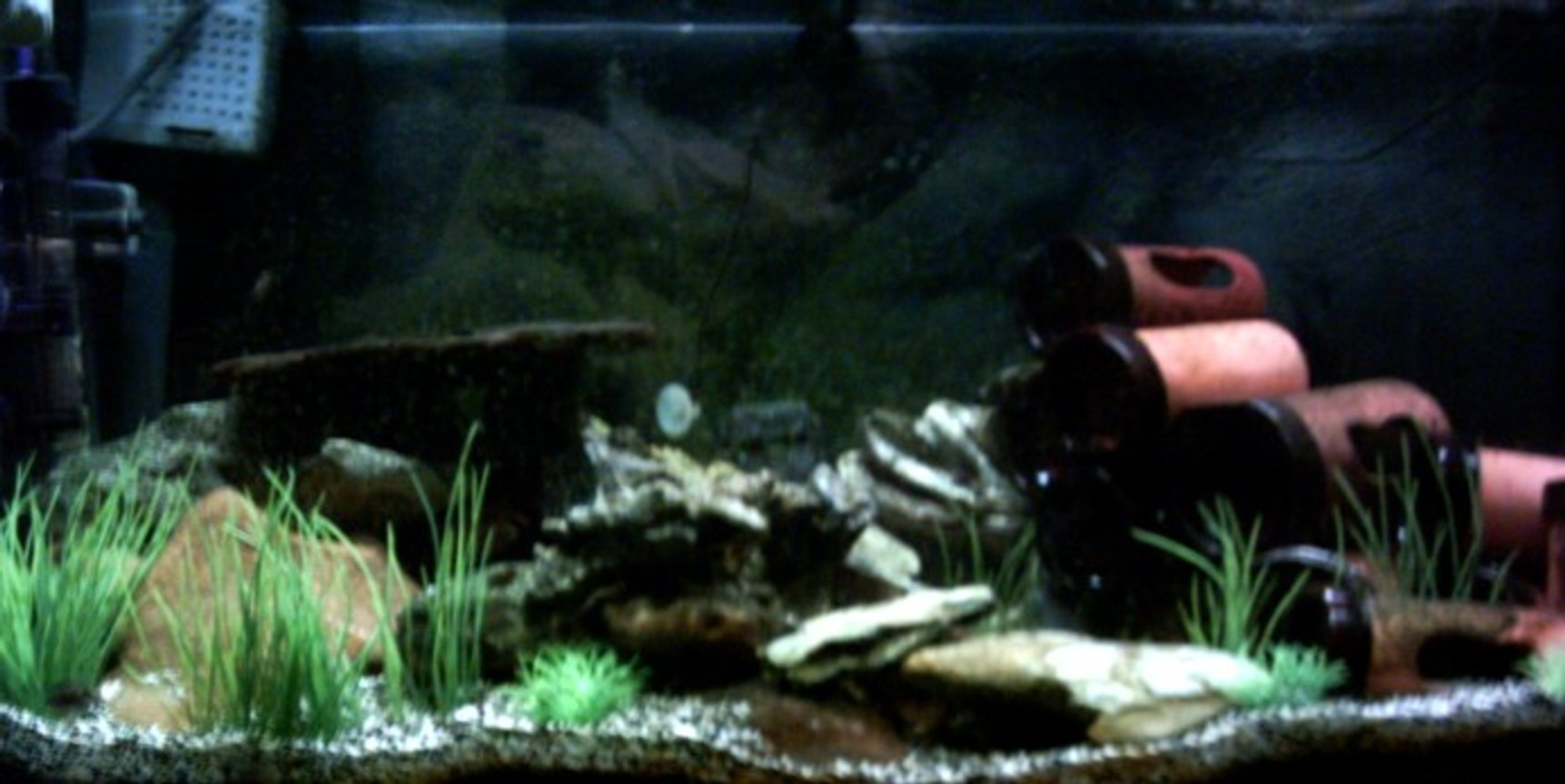 96 gallons freshwater fish tank (mostly fish and non-living decorations) - Tanganyka tank......... Tropheus Moorii 7x Alto Calvus Featherfin Synodontis Pleco 2x half banded barbs Crushed coral and black sand, ceramic pipes, plastic plants, slate and plastic rocks. AR-850.