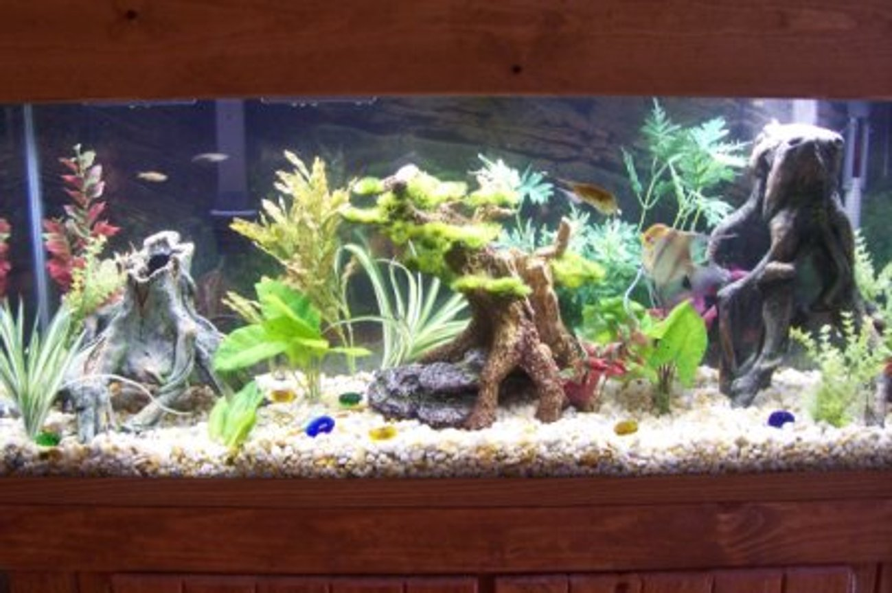 55 gallons freshwater fish tank (mostly fish and non-living decorations) - 55 GALLON COMMUNITY