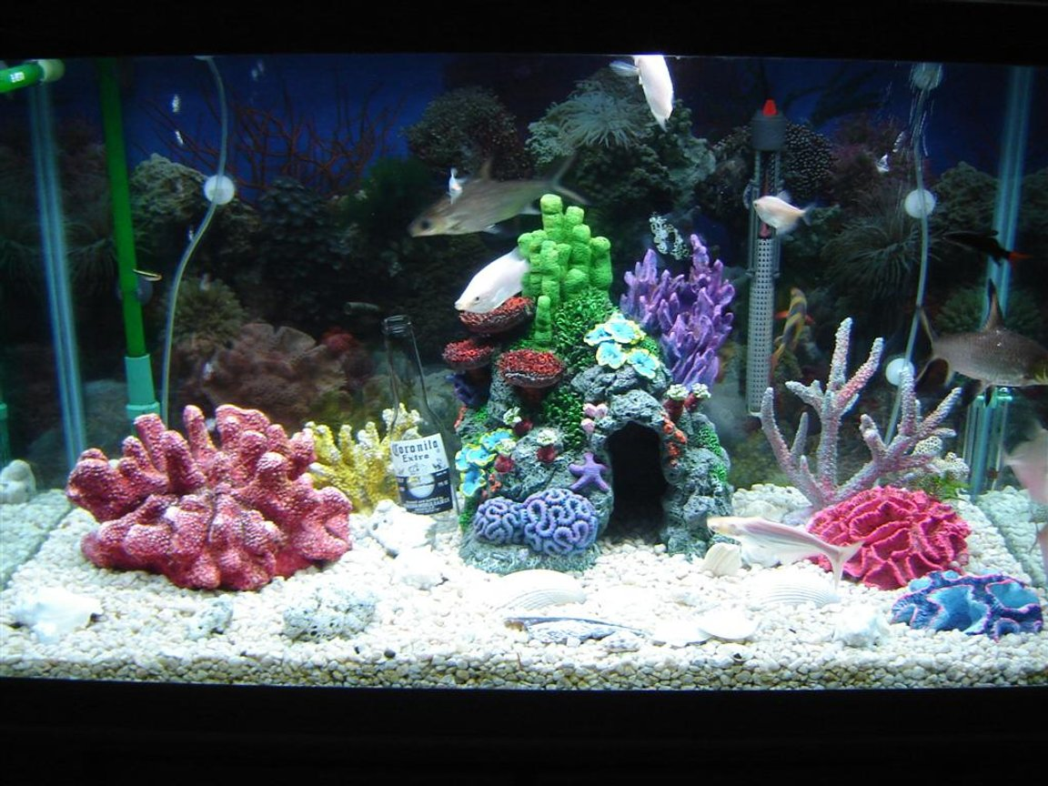 55 gallons freshwater fish tank (mostly fish and non-living decorations) - its super cool