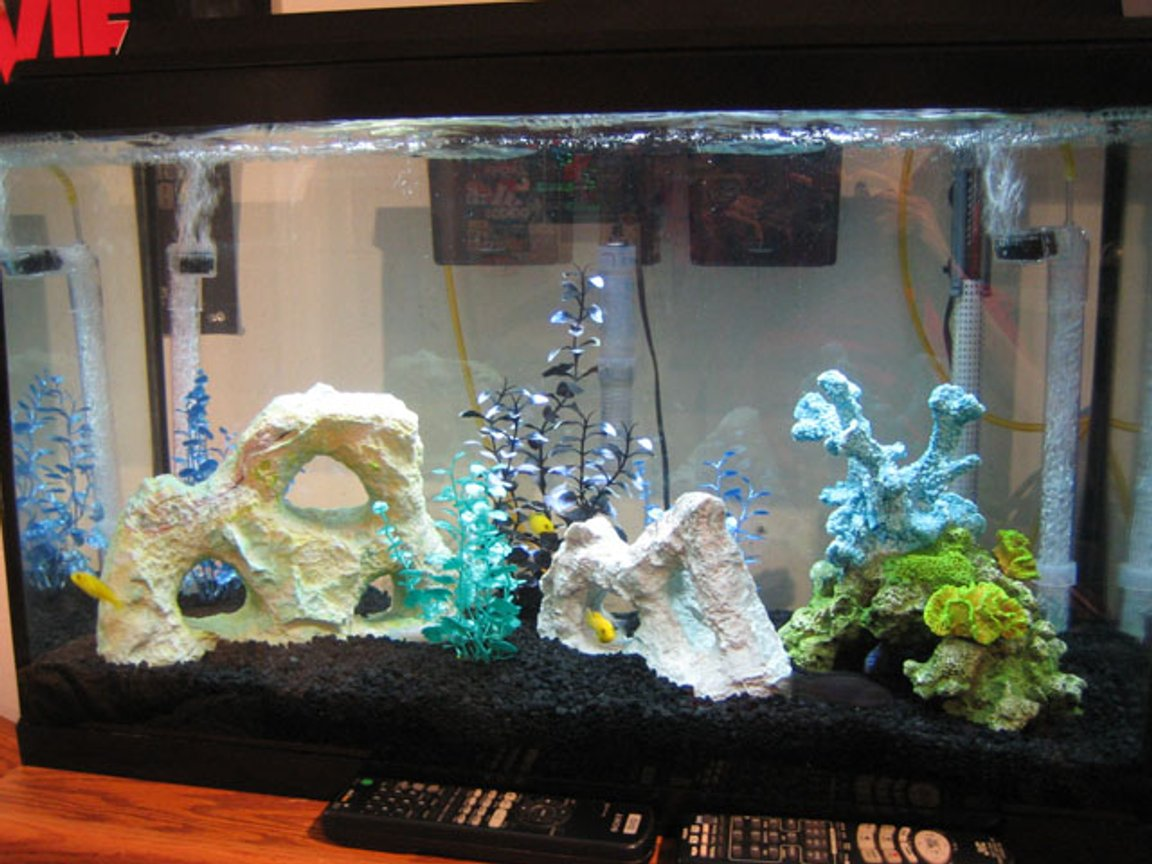 30 gallons freshwater fish tank (mostly fish and non-living decorations) - my fish tank :)