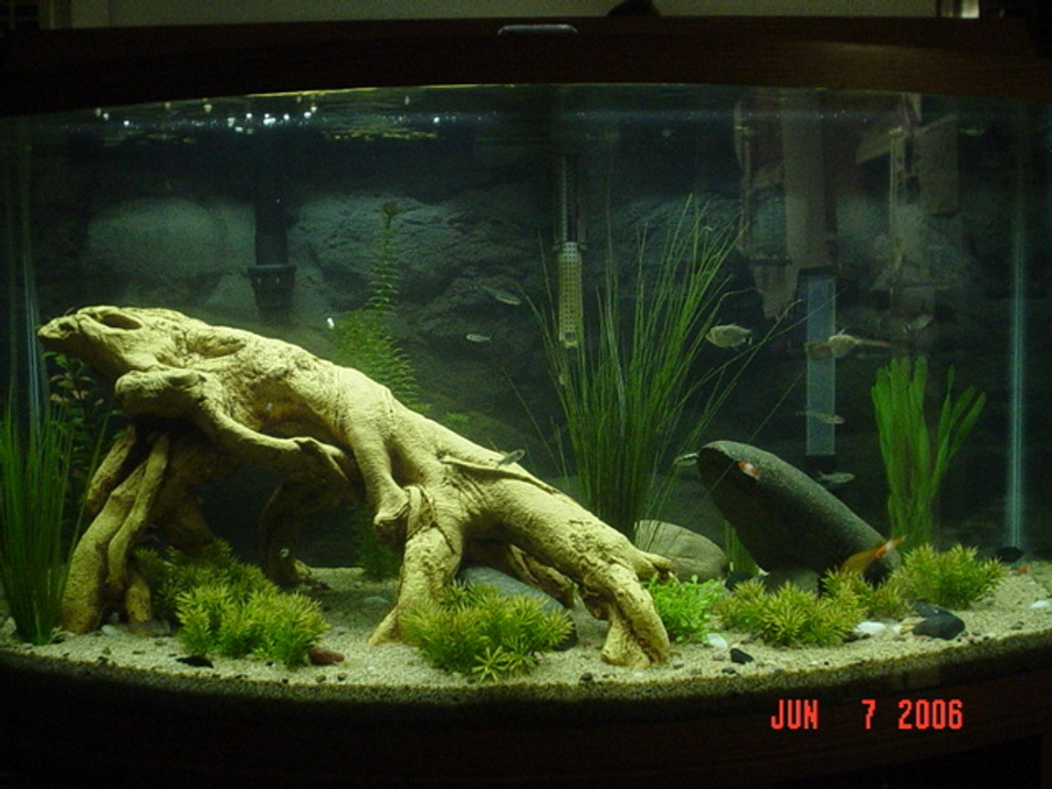 46 gallons freshwater fish tank (mostly fish and non-living decorations) - 46 gal Bowfront freshwater tank with fish and non-living decor
