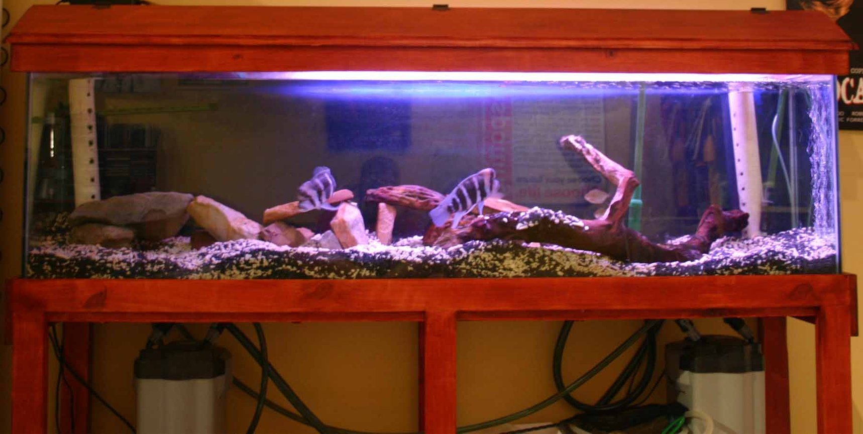 80 gallons freshwater fish tank (mostly fish and non-living decorations) - Frontosa Tank (Without Flash)