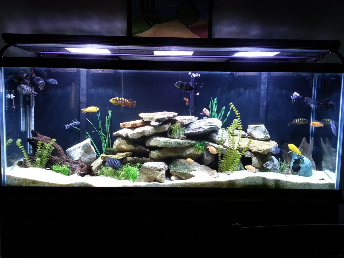 150 gallons freshwater fish tank (mostly fish and non-living decorations)