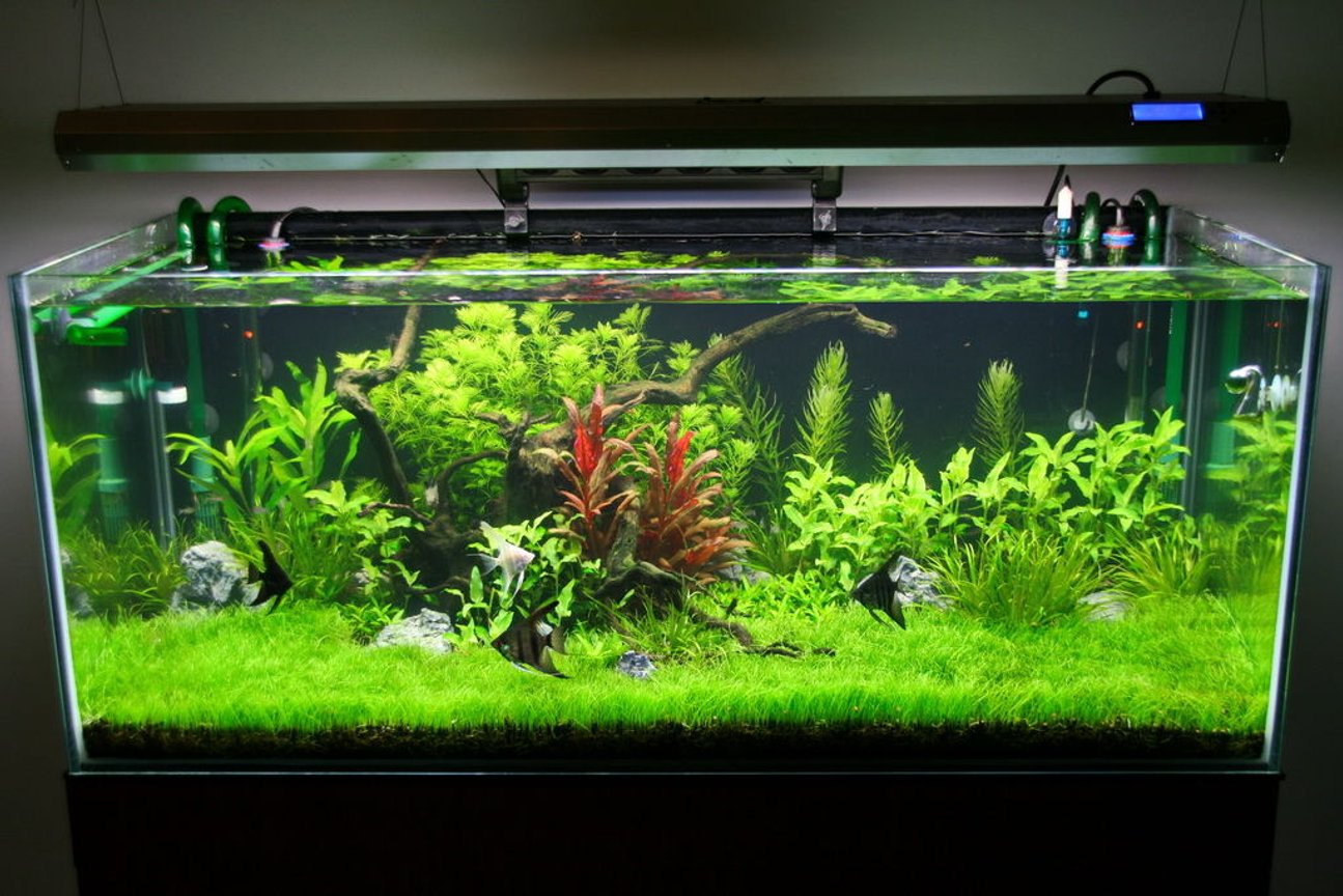 80 gallons freshwater fish tank (mostly fish and non-living decorations) - 2 months of age