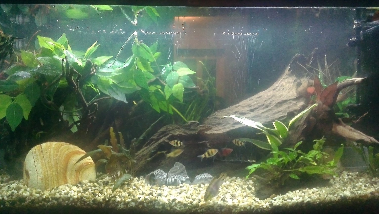 30 gallons freshwater fish tank (mostly fish and non-living decorations) - An updated version of my original tank that I had on here
