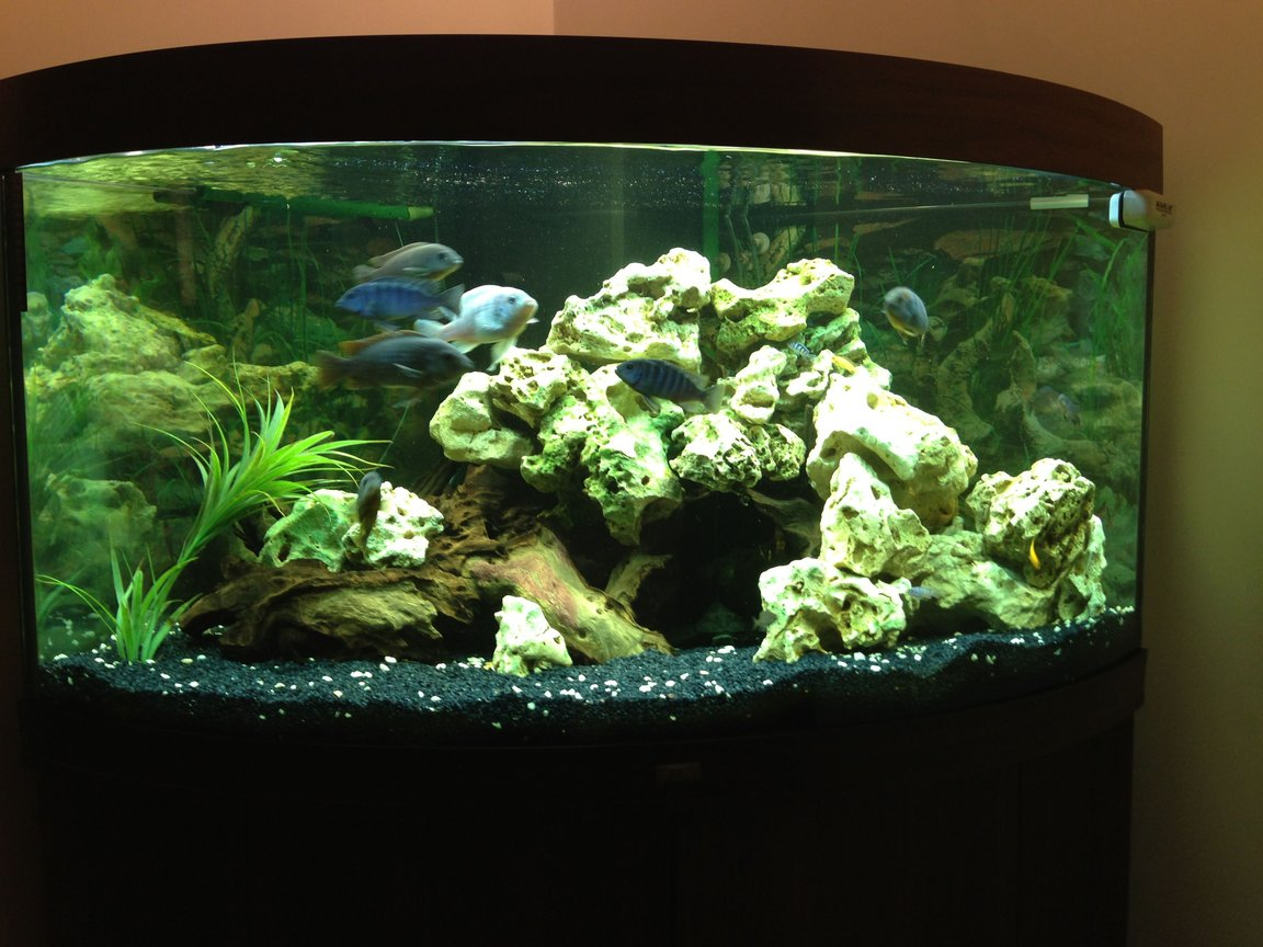 90 gallons freshwater fish tank (mostly fish and non-living decorations) - Trigon 350