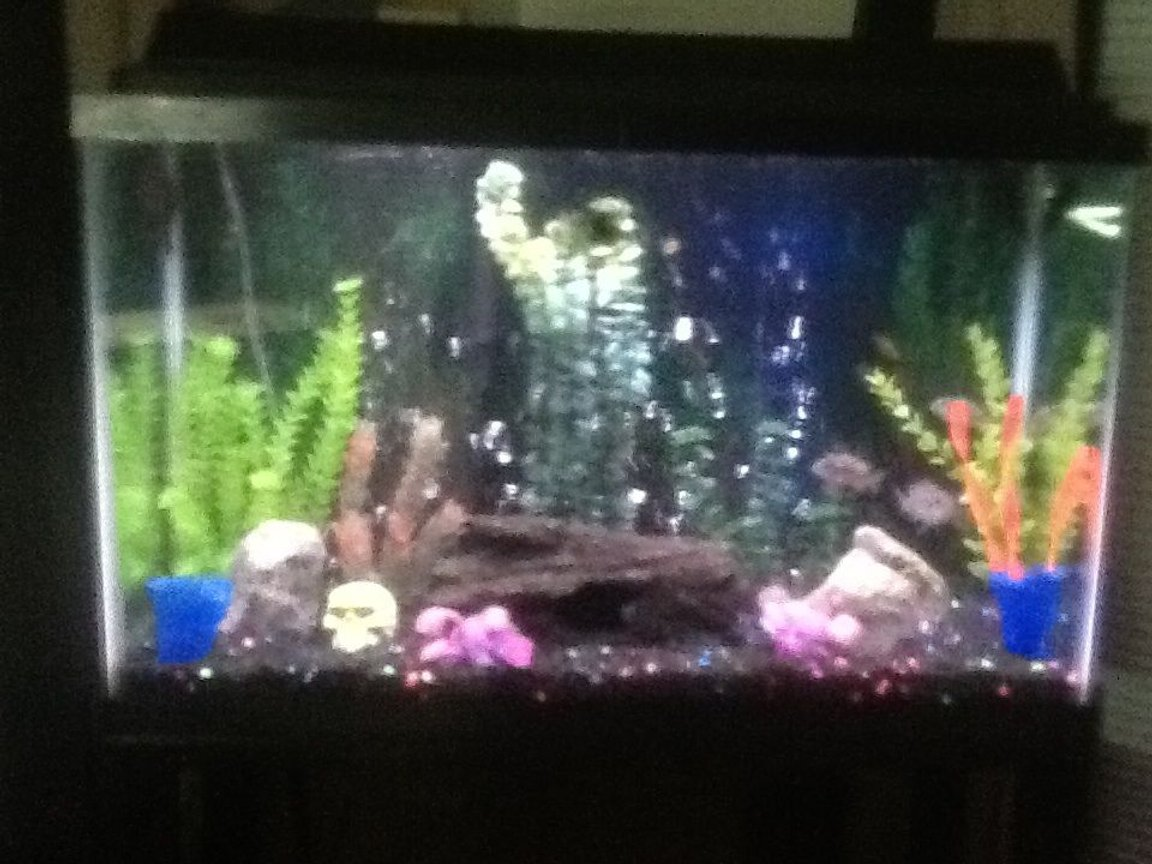 30 gallons freshwater fish tank (mostly fish and non-living decorations) - Tank 1 .... 4 African Cichlids