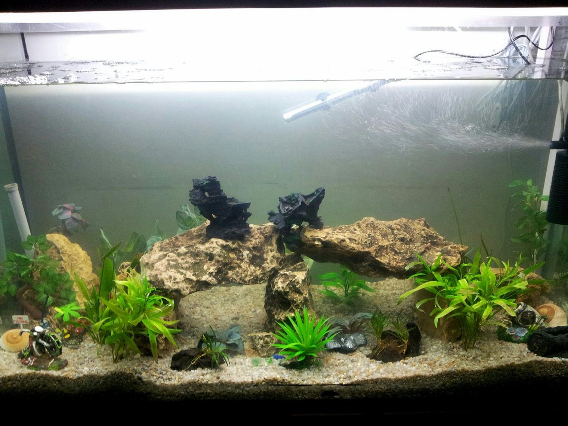 115 gallons freshwater fish tank (mostly fish and non-living decorations) - filled white