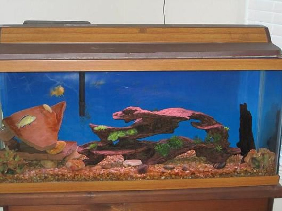 38 gallons freshwater fish tank (mostly fish and non-living decorations) - 30 gal cichlids tank