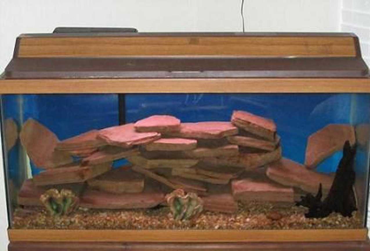 38 gallons freshwater fish tank (mostly fish and non-living decorations) - african cichild tank