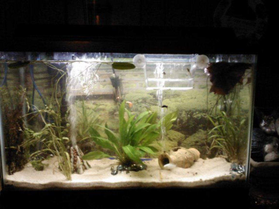 29 gallons freshwater fish tank (mostly fish and non-living decorations) - This is a picture from a few months ago. I had 4 guppies, but they all passed on. I do, however, have 4 batches of their babies in a separate tank :-D