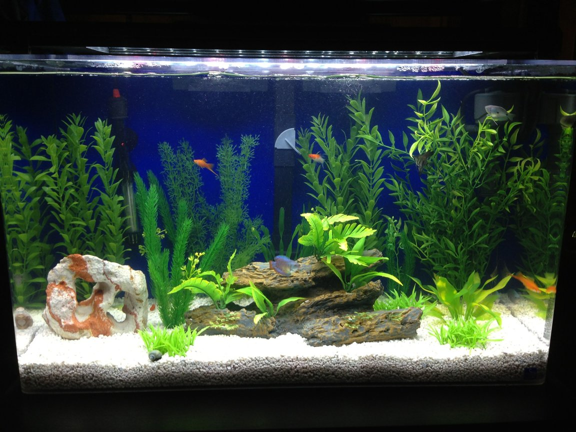 29 gallons freshwater fish tank (mostly fish and non-living decorations) - seaclear 29 gallon