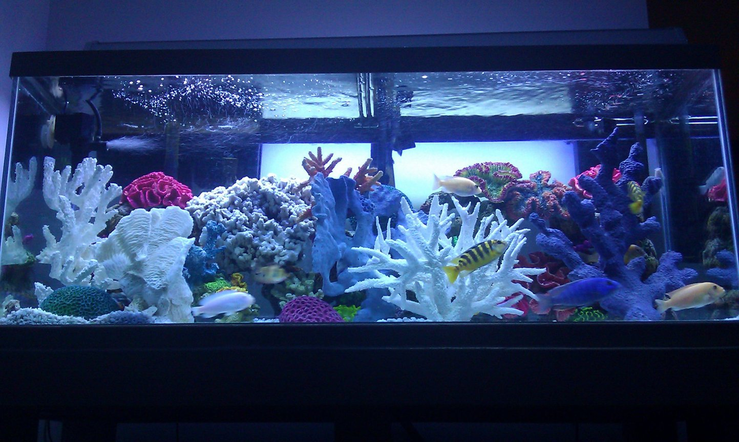 75 gallons freshwater fish tank (mostly fish and non-living decorations) - 75 gallon freshwater African Cichlid aquarium. Freshwater/saltwater theme!