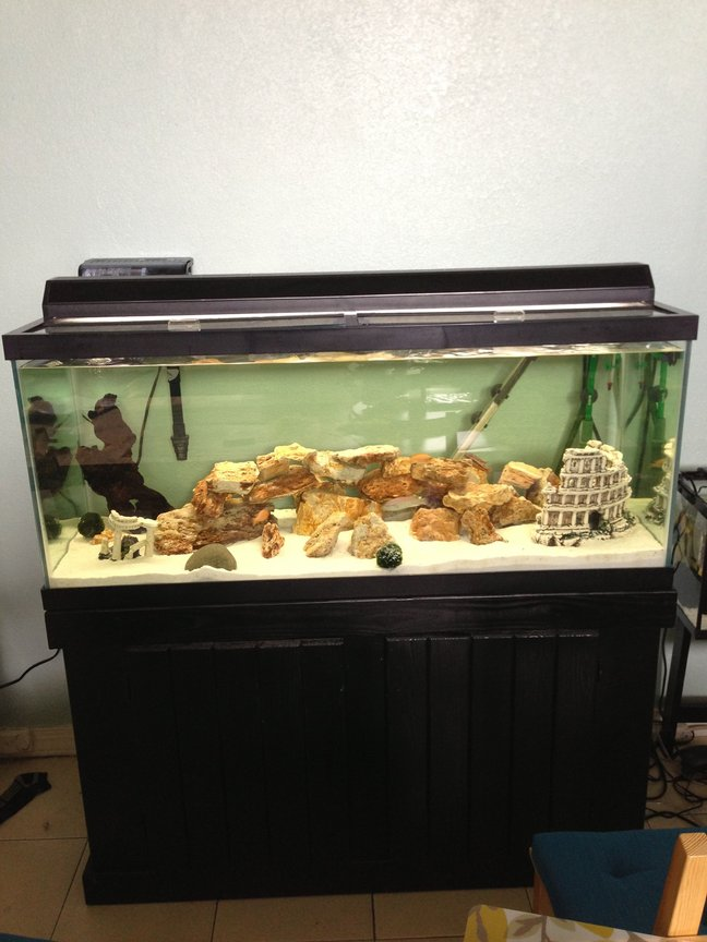75 gallons freshwater fish tank (mostly fish and non-living decorations) - My main tank