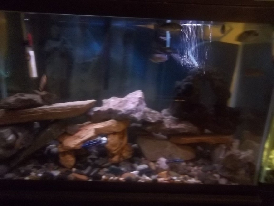 29 gallons freshwater fish tank (mostly fish and non-living decorations) - 29 gallon African cichlid tank