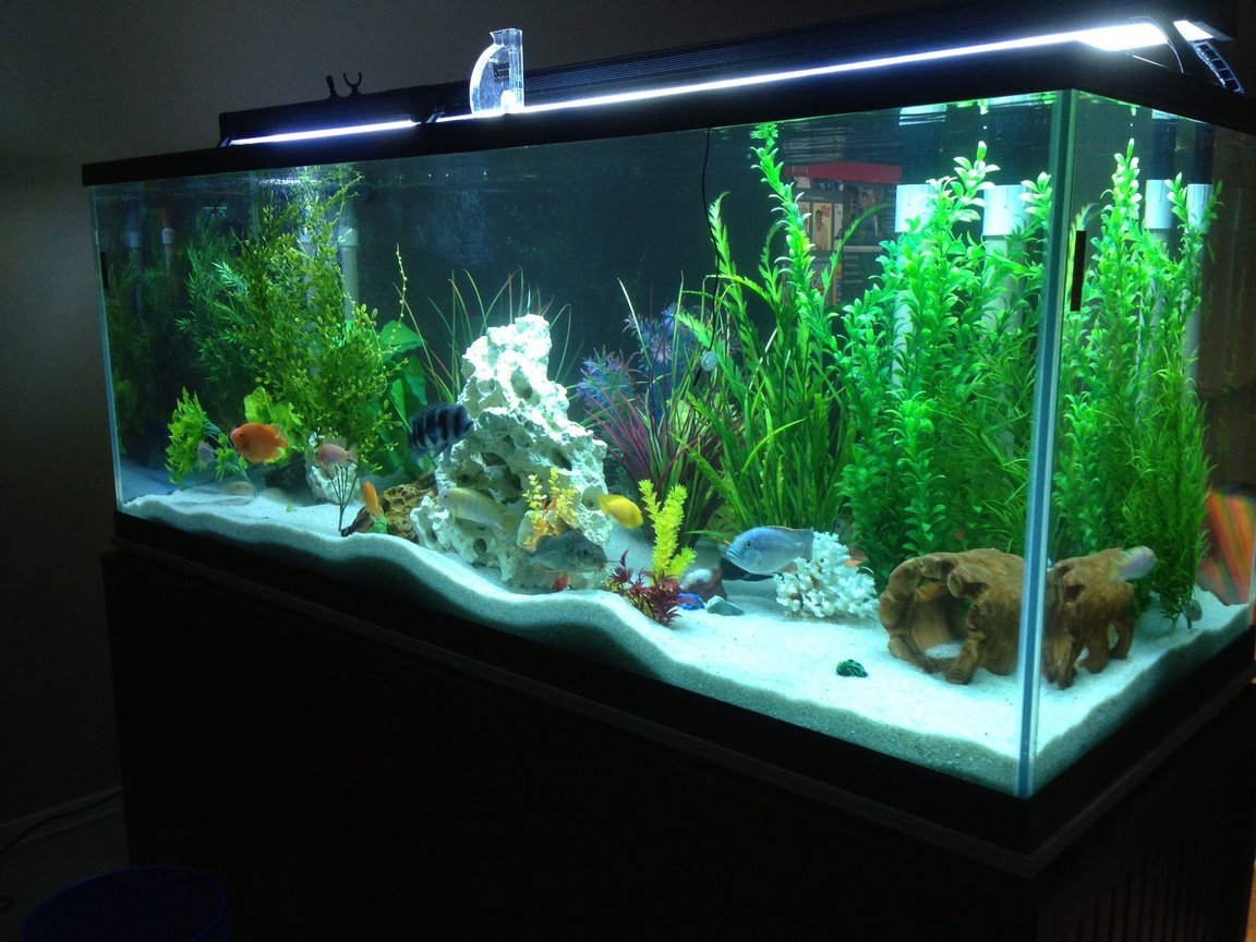 225 gallons freshwater fish tank (mostly fish and non-living decorations) - 225 gal cichlid tank