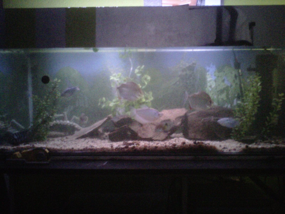 100 gallons freshwater fish tank (mostly fish and non-living decorations) - 300l tank with 2 dollers , 2 terrors , 2 bleustrain - and one moonlight - gouramy , 2 plecos and a few smaller naighbors