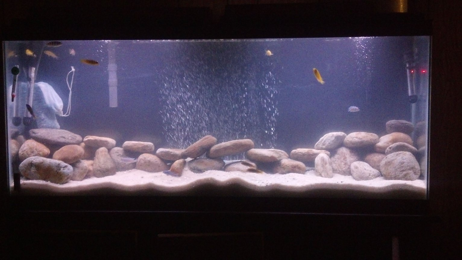 55 gallons freshwater fish tank (mostly fish and non-living decorations) - 55 gall tank for African Cichlid tank with sand and river rocks