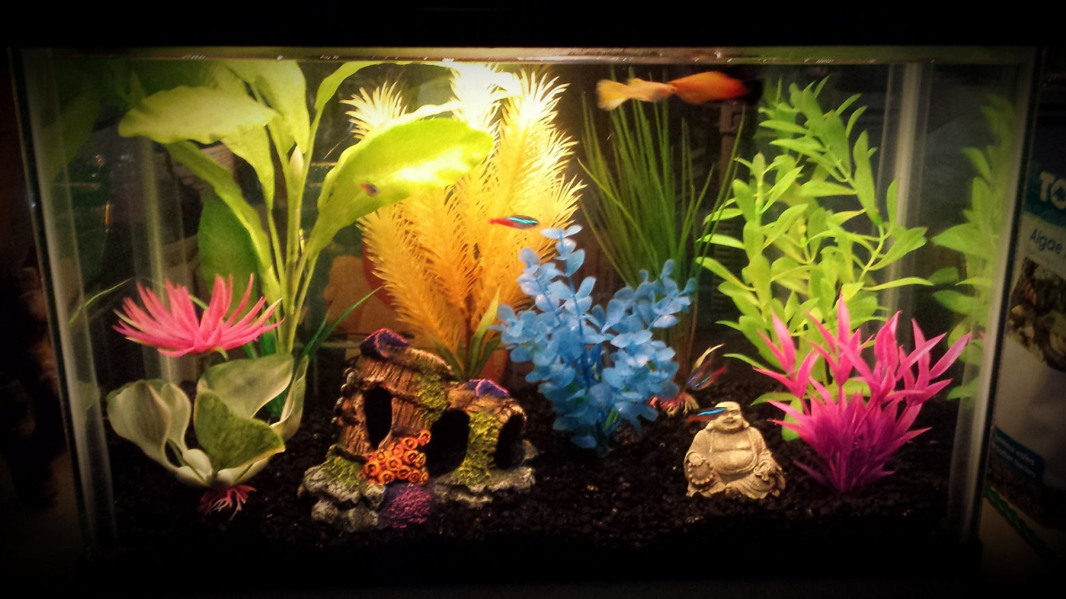 5 gallons freshwater fish tank (mostly fish and non-living decorations)