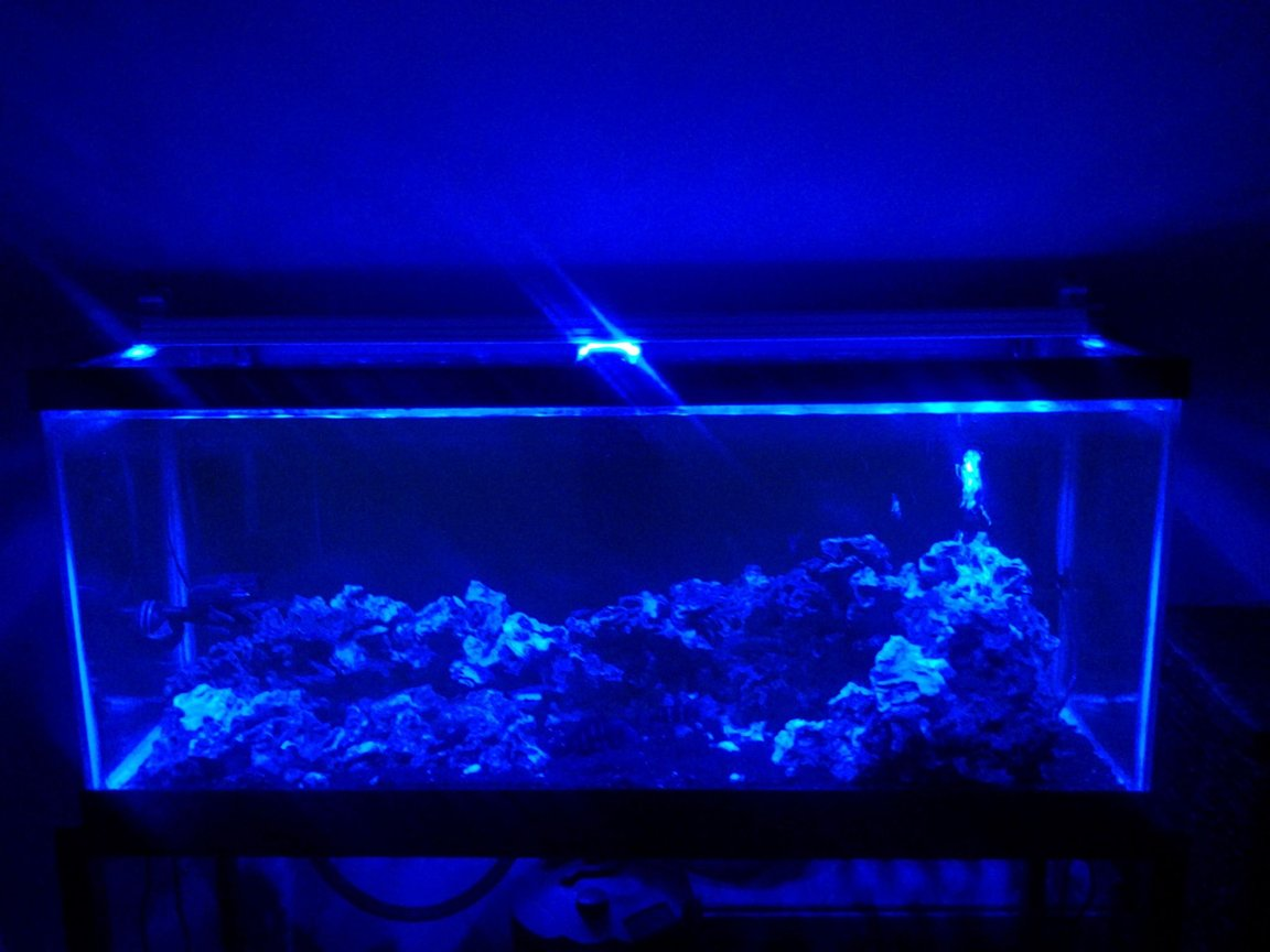75 gallons freshwater fish tank (mostly fish and non-living decorations) - 75g African Tank