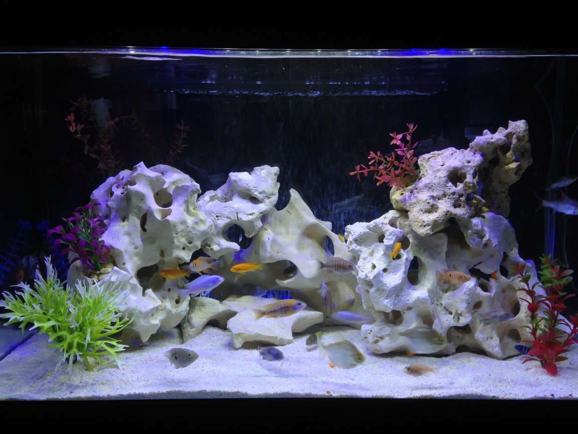 58 gallons freshwater fish tank (mostly fish and non-living decorations) - various cichlids & tropicals