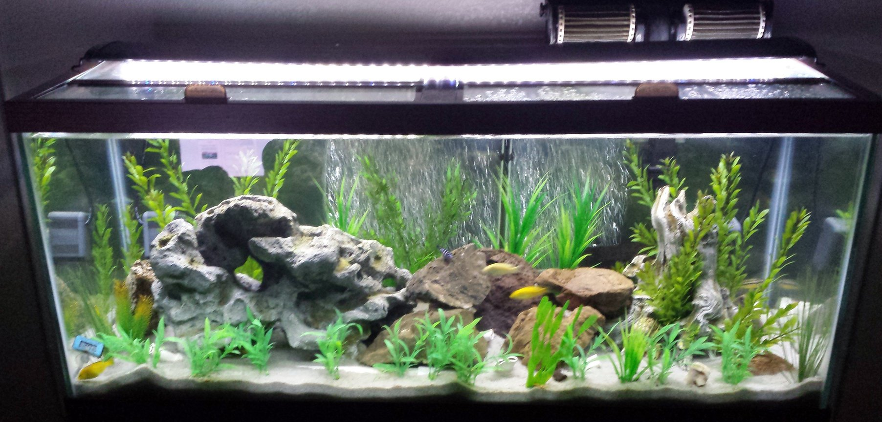 75 gallons freshwater fish tank (mostly fish and non-living decorations) - 75 Gal