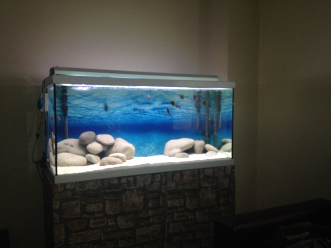 200 gallons freshwater fish tank (mostly fish and non-living decorations) - Tropheus ikola wc f0