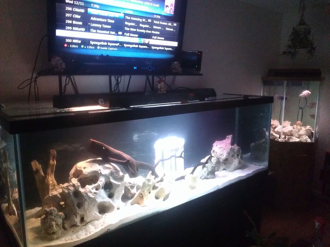 75 gallons freshwater fish tank (mostly fish and non-living decorations) - 180/65