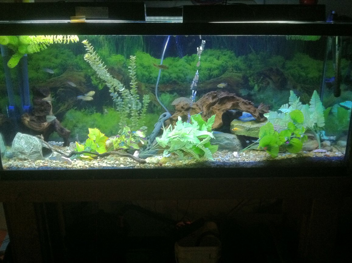 100 gallons freshwater fish tank (mostly fish and non-living decorations) - After cycle and day 2 after fish introduction