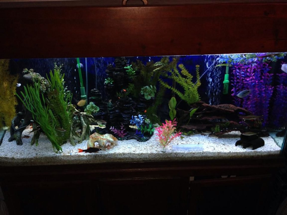 125 gallons freshwater fish tank (mostly fish and non-living decorations) - 125 gallon tall.