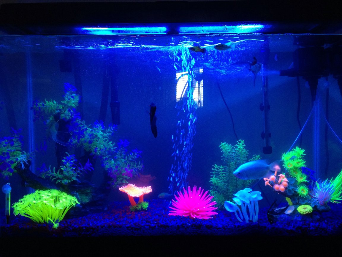 45 gallons freshwater fish tank (mostly fish and non-living decorations) - This is my 45 gallon tank