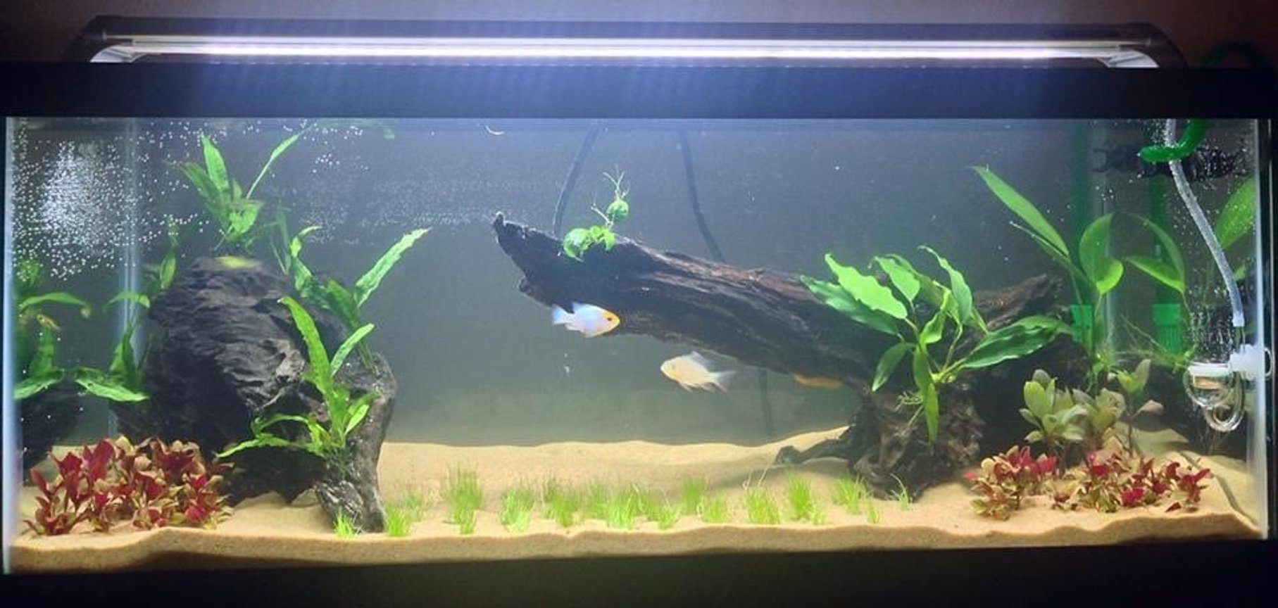20 gallons freshwater fish tank (mostly fish and non-living decorations) - This is a new 20G long and it is a work in progress. This tank has co2, plant fertilizers, a canister filter, fuseray lighting, etc.