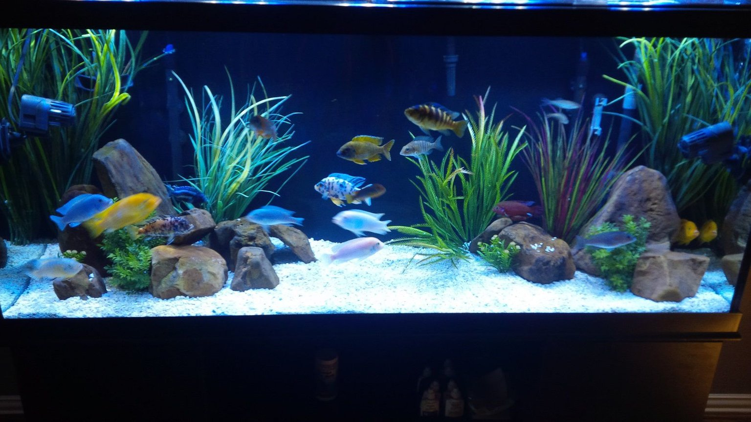 120 gallons freshwater fish tank (mostly fish and non-living decorations) - 120 gallon mbuna-peacock tank with 9 more peacocks on the way.