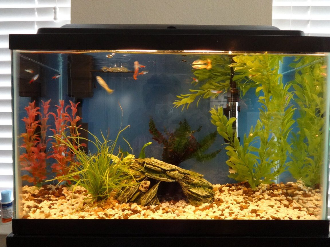 10 gallons freshwater fish tank (mostly fish and non-living decorations) - Guppies neon teras and couple of molly fry