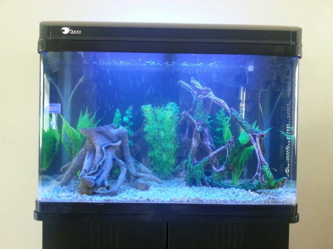 40 gallons freshwater fish tank (mostly fish and non-living decorations)