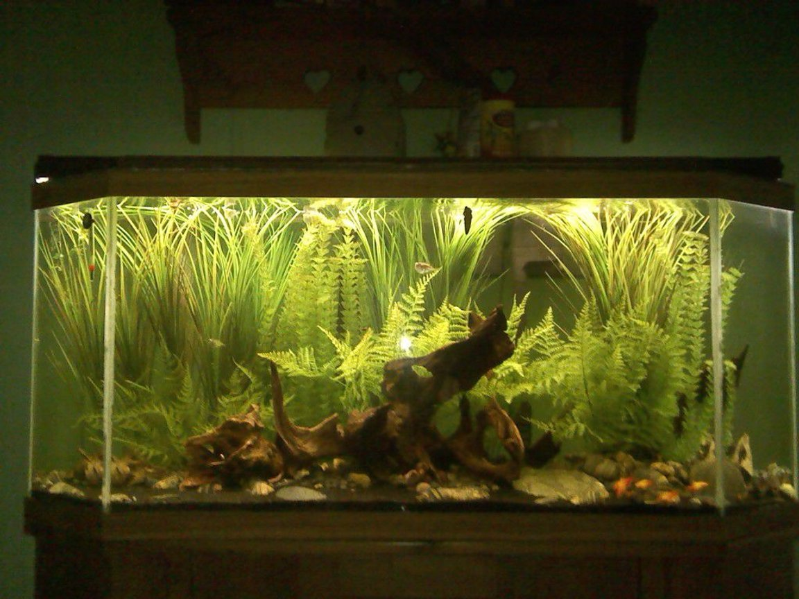 55 gallons freshwater fish tank (mostly fish and non-living decorations) - I wanted this tank have the feeling of being a part of a small creek. Most of the plastic plants are from the craft store.