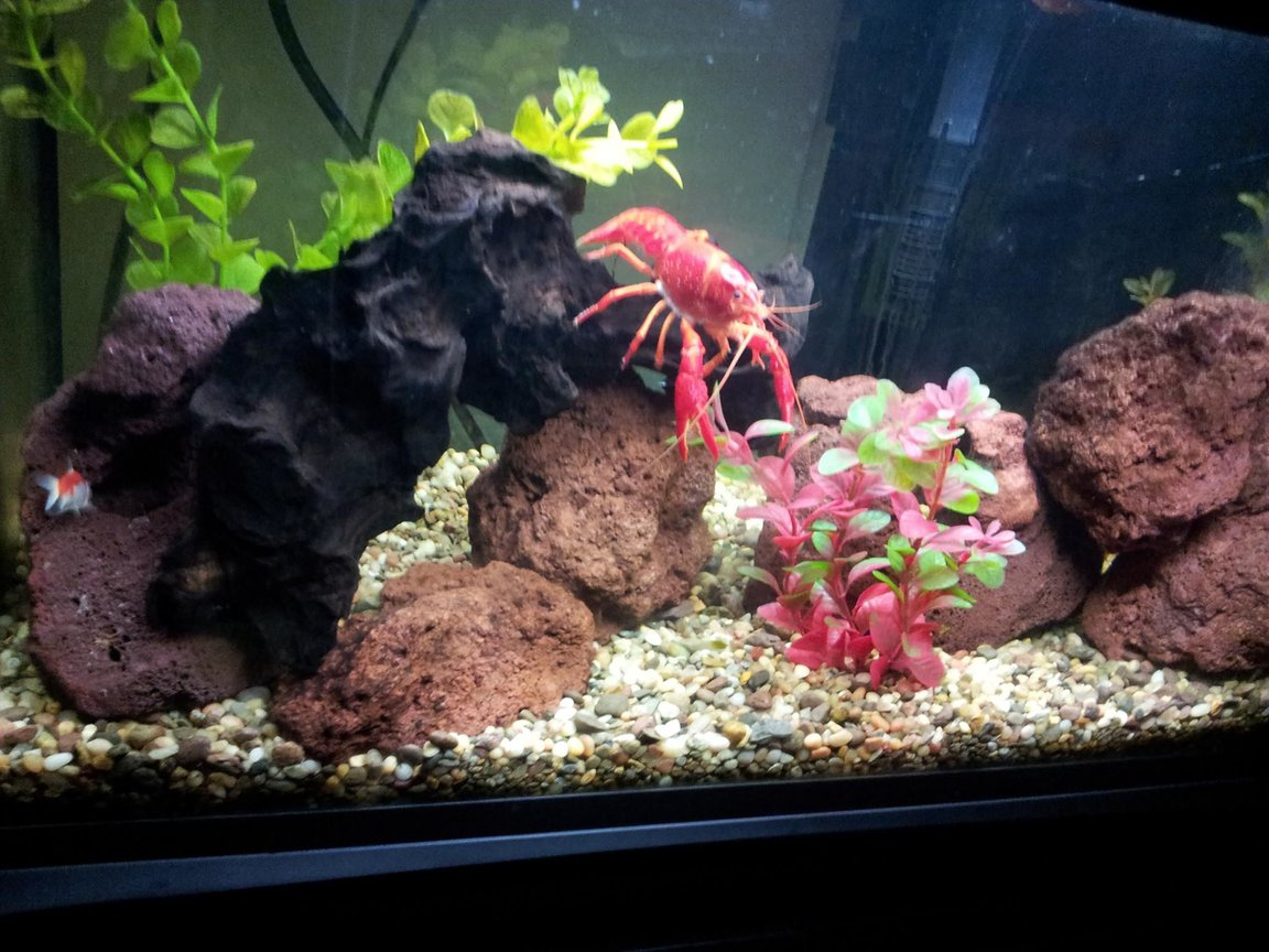 65 gallons freshwater fish tank (mostly fish and non-living decorations) - 20gal fishtank, lava rocks driftwood one big red clawfish lobster i keep only plastic plants in this tank the lobster eat every real plants so i feed him one time per week with lettuce.