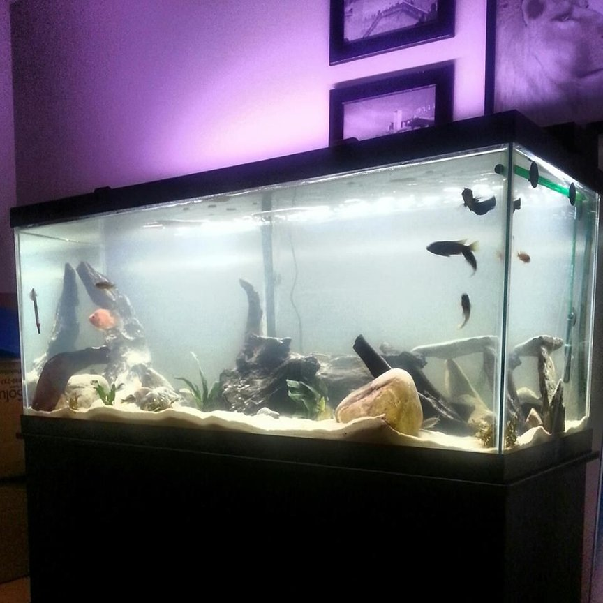 75 gallons freshwater fish tank (mostly fish and non-living decorations) - New Set up
