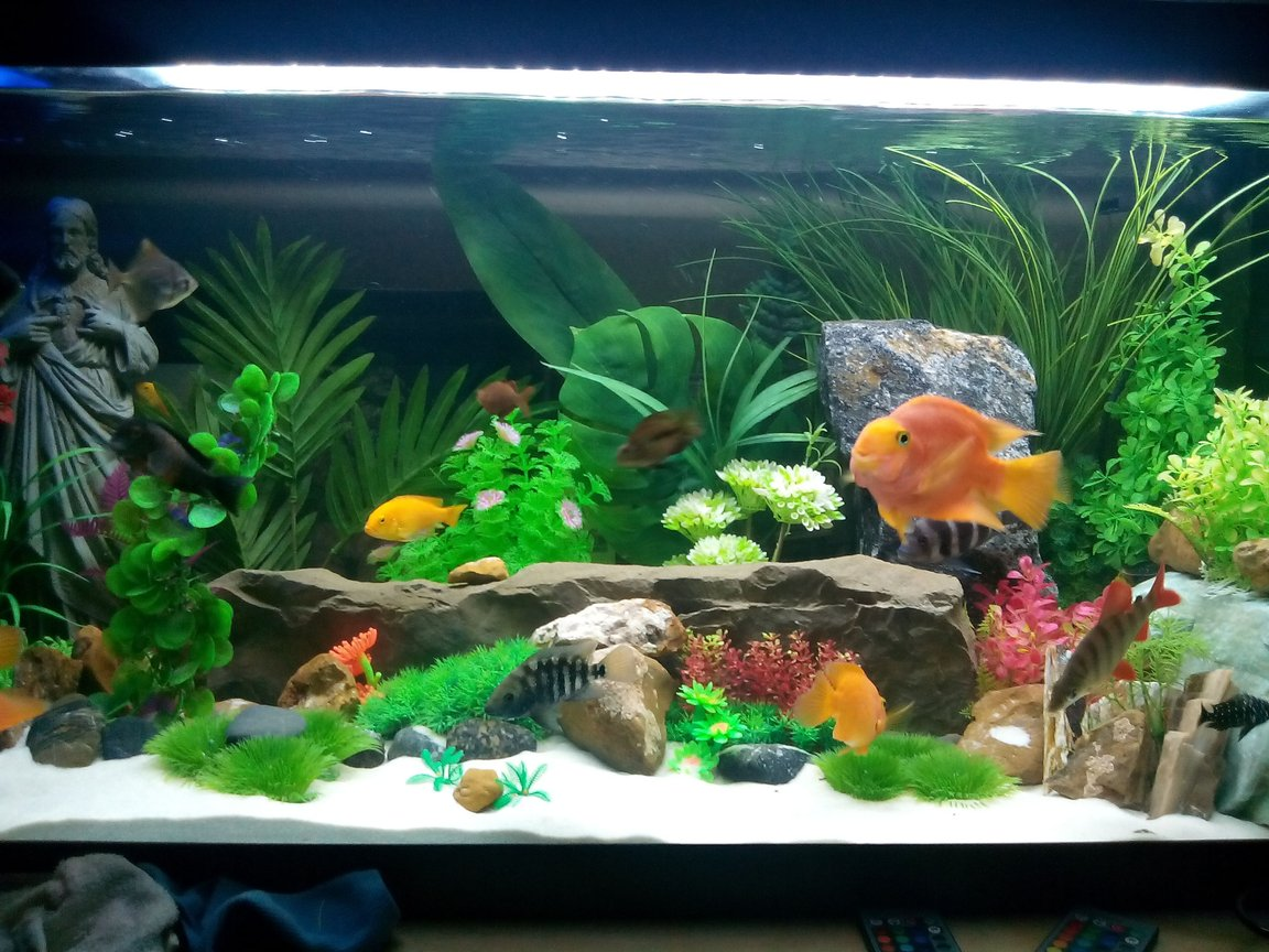 125 gallons freshwater fish tank (mostly fish and non-living decorations) - ..