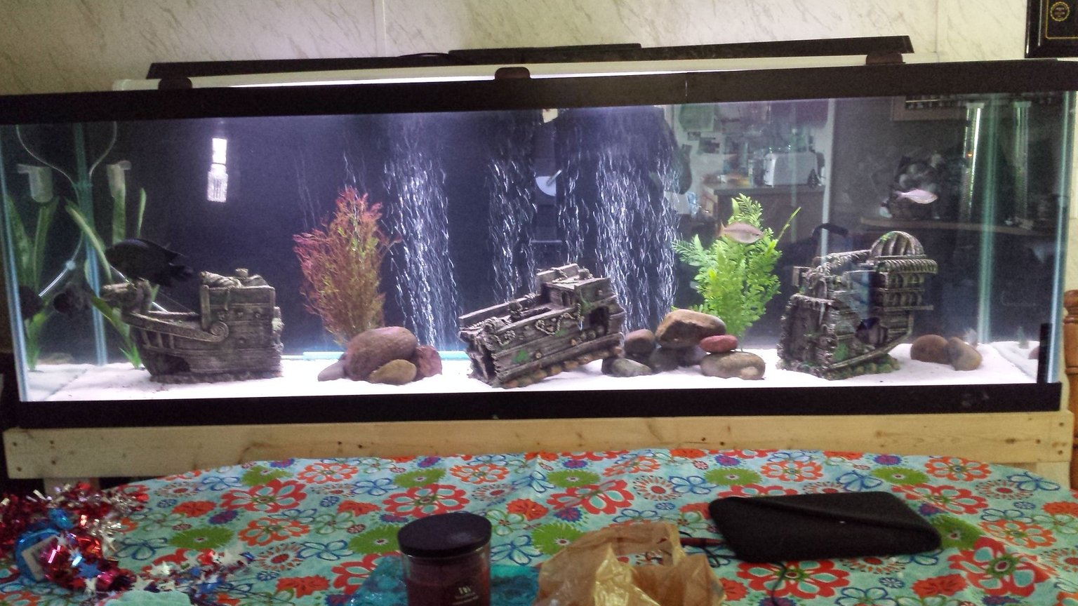 135 gallons freshwater fish tank (mostly fish and non-living decorations) - Hard to fit a tank 6 foot long in a good picture. Lol