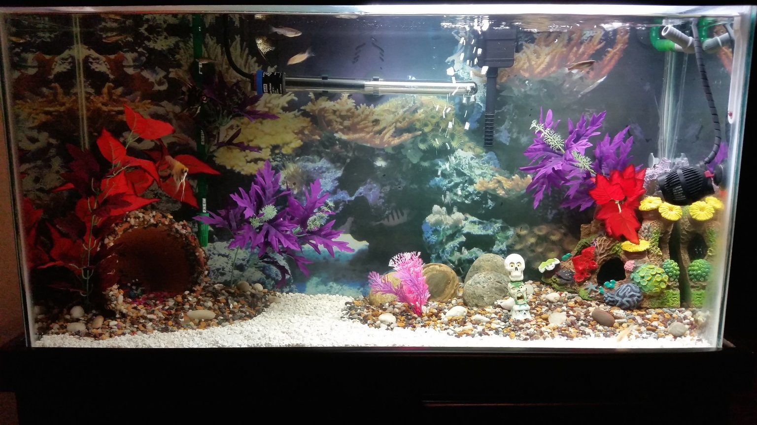 40 gallons freshwater fish tank (mostly fish and non-living decorations) - 40 gal community tank