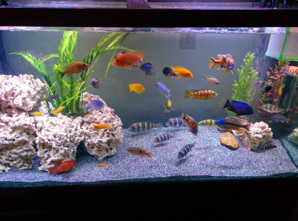 90 gallons freshwater fish tank (mostly fish and non-living decorations) - Waiting on new sand to settle.